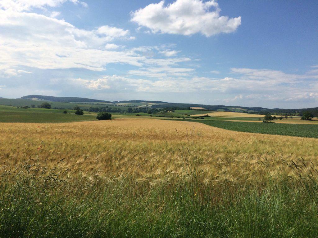 Bei mir vor der Haustür: Felder in der Gemarkung Westuffeln im Juni 2019. (Bild: Ferdinand Müller)